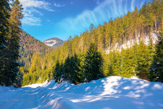 winter landscape in synevir national park. beautiful nature scenery with fir trees along the snow covered road. wonderful sunny weather with clouds on the sky