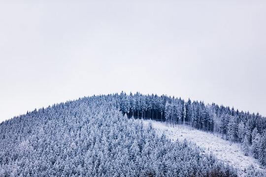 pine forest covered with snow on top of a hill in the Sudetes, Poland