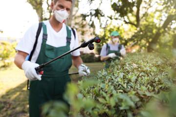 Obraz Workers spraying pesticide onto green bush outdoors. Pest control - fototapety do salonu