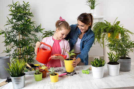 Two beautiful girls watering the plant in their lovely home