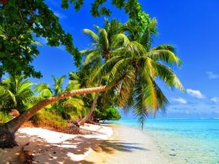 Fototapeta Palm Tree By Sea Against Blue Sky obraz
