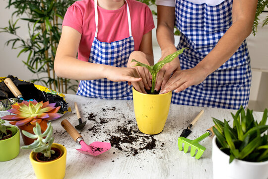 Close up of plant transplantation in a yellow flowerpot attempted by two young women