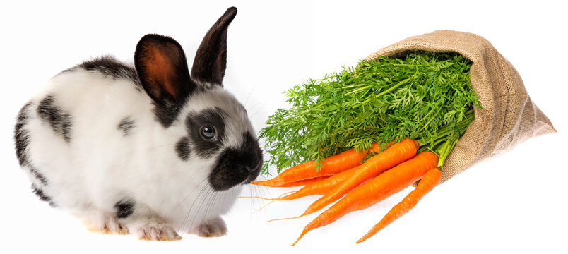cute rabbit and sack with carrot isolated on a white
