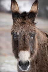 Selective focus shot of a funny cute donkey face