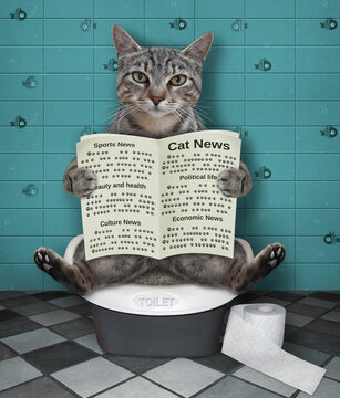 A gray cat is sitting on a toilet trayl and reading a newspaper in a bathroom.
