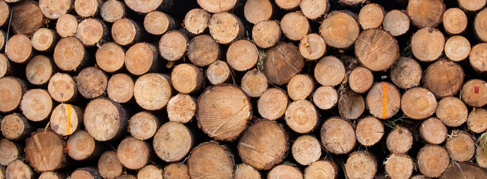 wood background cut trees Wood texture deforestation