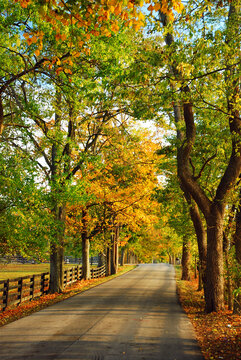 Autumn foliage creates a canopy over a bucolic country road