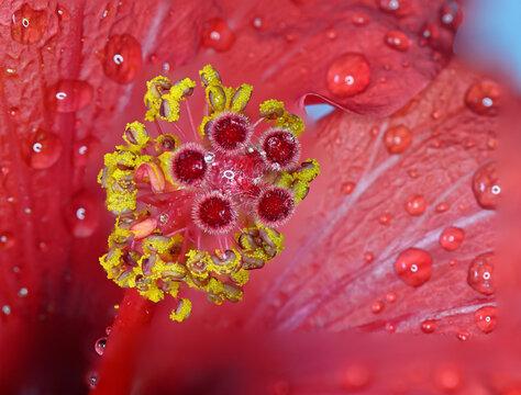macro cup of flower