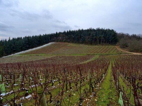 Vignoble au  cœur de la Côte Chalonnaise.