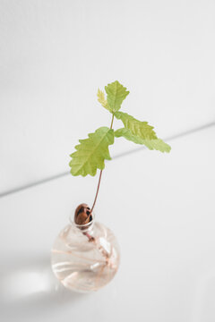 A acorn growing from a glass vase