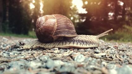 Fototapeta Surface Level Of Snail On Ground obraz