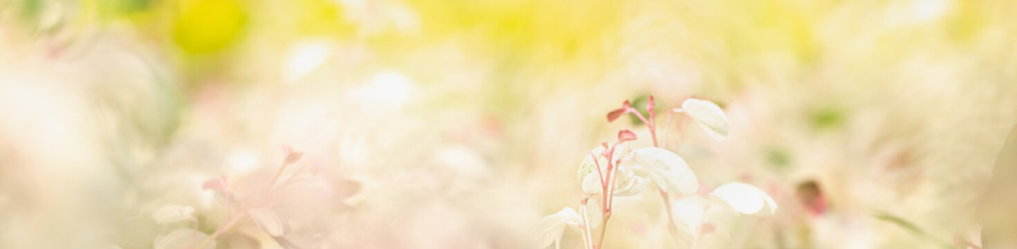 Concept nature view of White and pink flowerson blurred greenery background in garden and sunlight with copy space using as background natural green plants landscape, ecology, fresh wallpaper concept