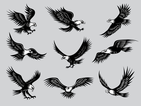 Flying eagles. Silhouettes of birds wild hawks freedom animals for motorcycle emblems recent vector illustrations. Eagle tattoo wildlife, soaring and hunting, flying wild bird
