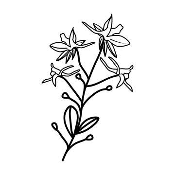 Larkspur Floral Hand Drawn. Vector Design Illustration Sign.
