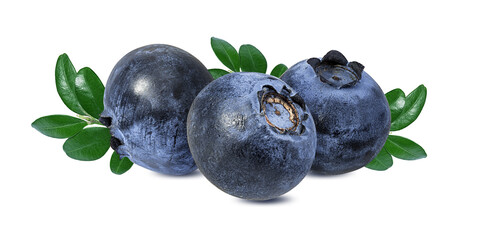 Fototapete - Blueberry isolated. Blueberry on white background. Bilberry.