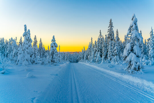 Cross country skiing slope running through a snow covered frozen forest at dusk.