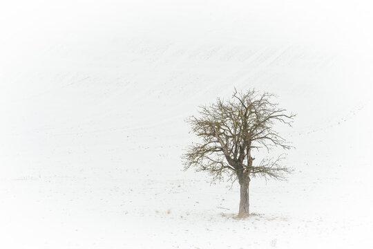 Obstbaum im Winter