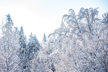 Śnieg zima kaszuby wieżyca las drzewa