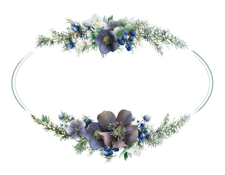 Oval floral frame of juniper branches with blue berries, snowberry, leaves, fever-weed and violet hellebore flowers hand drawn in watercolor isolated on a white background. Watercolor Christmas frame