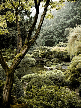 A pond sits in the middle of a lush, green garden scape.  A small bridge crossed the pond.