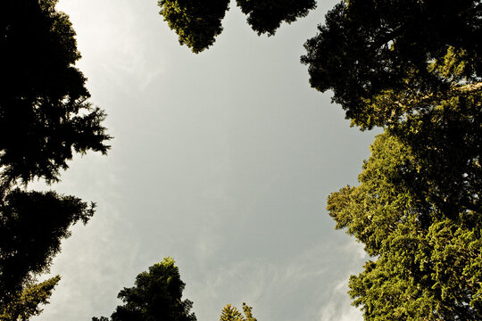 Looking strait up in a small clearing with a ring of trees surrounding  the frame.