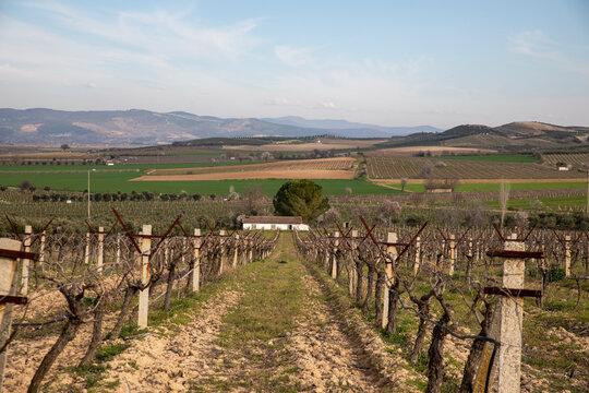 vineyards and countryside landscape,Vineyards after harvest