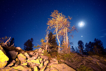 Birch grove on the mountain and stars