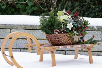 Fototapeta Korb mit Christrosen, Koniferen, Scheinbeere und Skimmia japonica als Winter-Gartendekoration