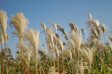 하늘과 갈대밭 Fotobehang