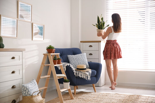 Woman carrying houseplant from wooden ladder to chest of drawers at home