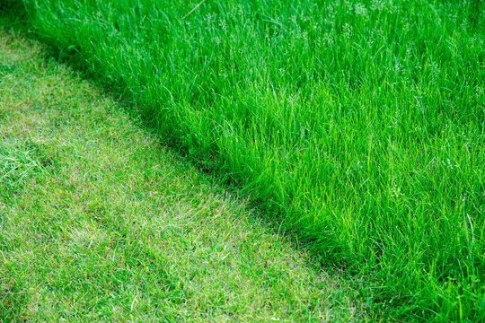Partially cut grass lawn. Green fresh grass. Difference between perfectly mowed, trimmed garden lawn or field for sports and long uncut grass. Lawn, carpet, natural green trimmed grass field.