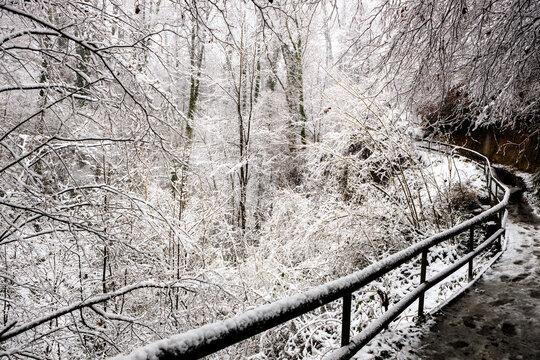 Winter dream VII