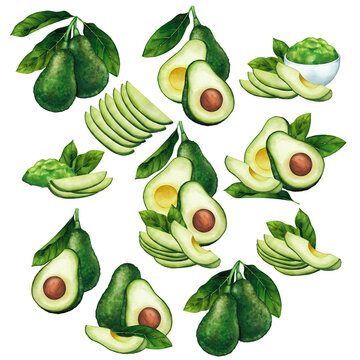 Watercolor composition of avocado fruits and leaves