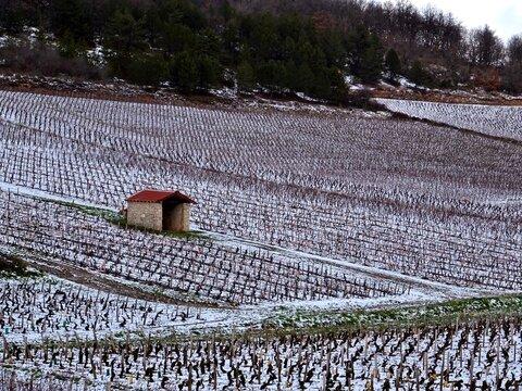 Vignoble de la Côte Chalonnaise sous la neige.