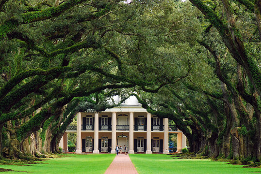 Old oak trees create a canopy over a plantation house