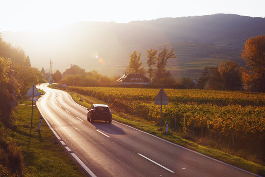 road through the vineyards at sunset