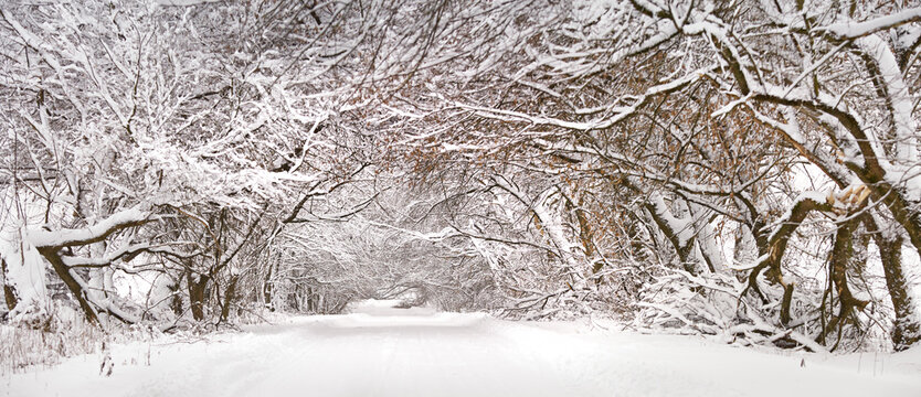 Winter snowy alley road panorama. Branches of trees and bushes. Snow-covered winding rural dirt street in village
