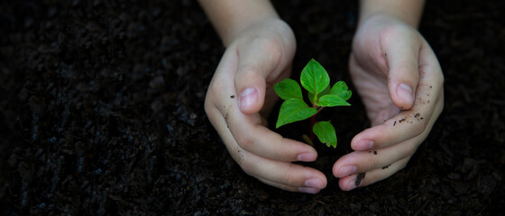 Hands child holding young plants keep environment on the back soil in the nature park of growth of plant for reduce global warming