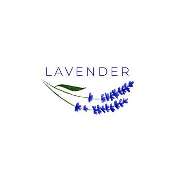 Watercolor lavender logo design template. Flower illustration.
