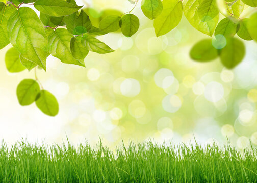 Natural green background with selective focus and green grass and fresh foliage in forest.