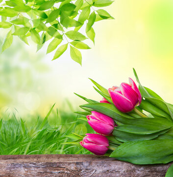 Spring with frame of grass and pink tulips on wooden table in nature.