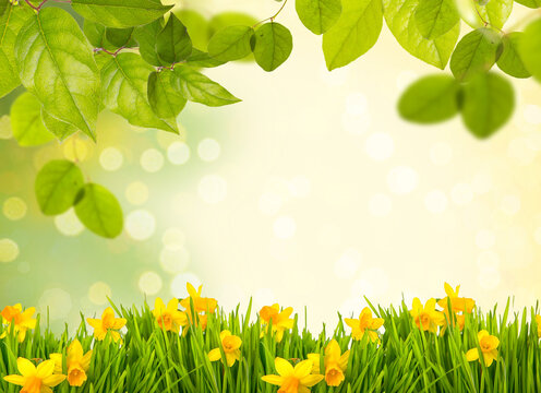 Spring summer background with frame of grass and leaves on nature. Juicy lush green grass on meadow with easter daffodils in morning sunny light outdoors, copy space, soft focus, defocus background.