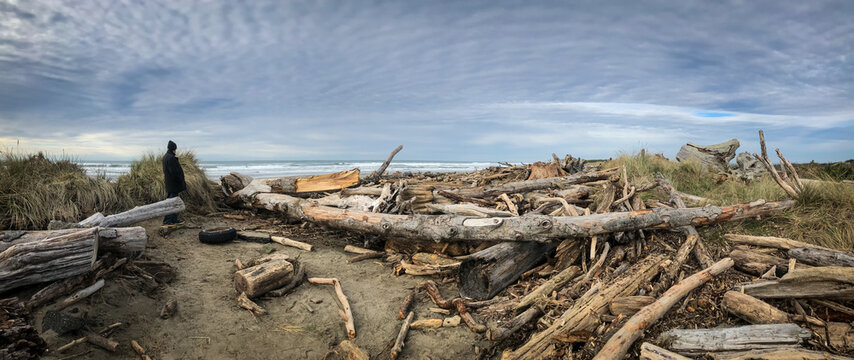 Panorama of driftwood covering beach after Oregon storm