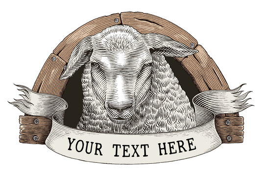 Sheep farm logo hand draw vintage engraving style clip art isolated on white background