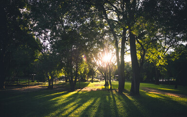 Sunlight shining though trees on to grass. Silhouetted trees.