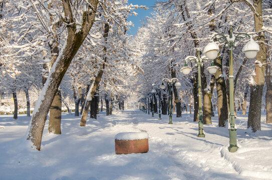 Winter fairy tale -  Snow in Bitola city Park, Macedonia