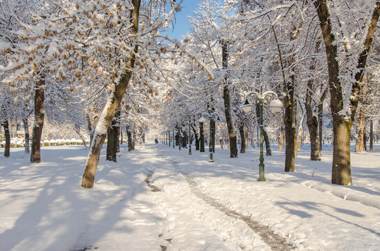 Macedonia – Bitola city – Snow in city park during winter