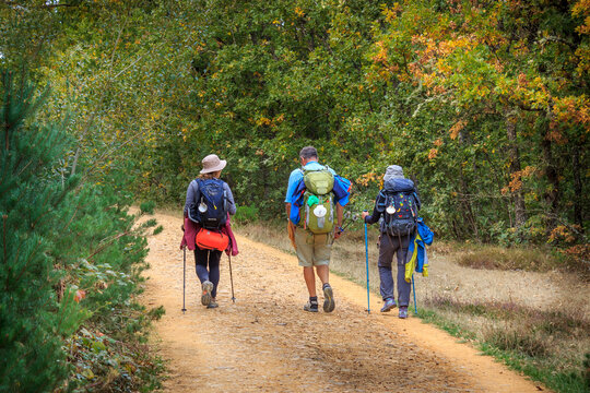 Pilgrims with Hiking Gear Walking in Autumn Forest in  Spain along the Way of St James - Camino de Santiago Pilgrimage Trail