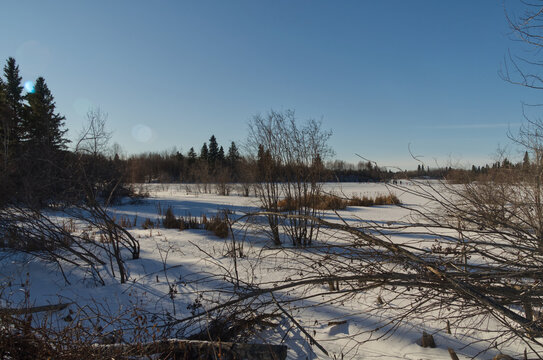Elk Island National Park in Winter