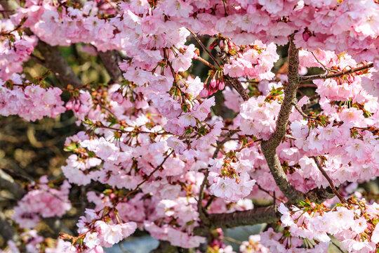 Romantic spring V